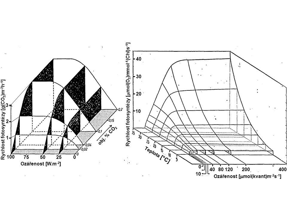 40 30. Rychlost fotosyntézy [mmol(O2)mmol-1(Chl)s-1] 20. Rychlost fotosyntézy [g(CO2)m-2h-1] 3.